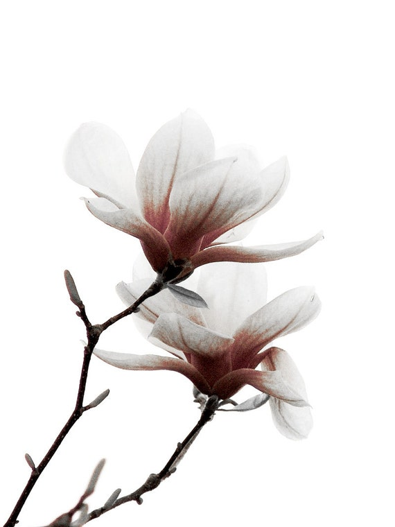 Items similar to Magnolia Flower Pink White Minimalist ...