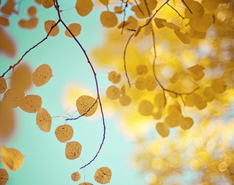 autumn fall foliage aspen nature photography / gold, yellow, golden, robins egg blue / nature's gold / 8x10 fine art photo