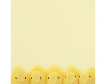 easter peep photography / yellow, marshmallow, candy, chick, nursery decor, child, butter yellow, animal / peep / 8x10