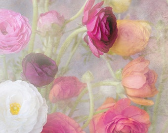 Ranunculus Photography - Pink and Yellow Romantic Blooms, Floral Photograph, Wall Decor