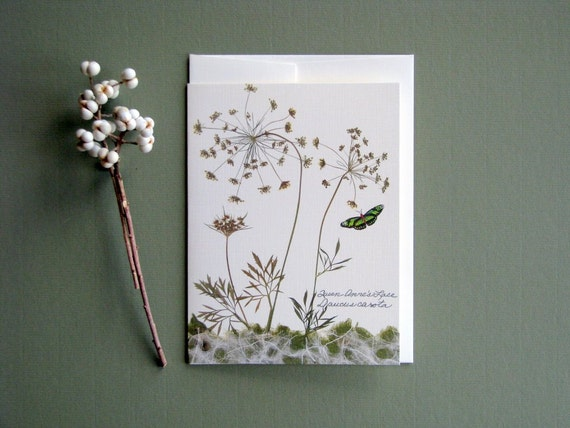 Queen Annes Lace wildflowers with green butterfly, botanical nature greeting card no.1025