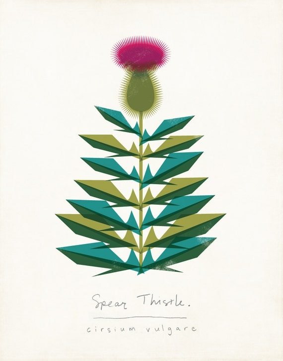 Spear Thistle Limited Edition Botanical Print