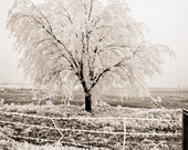 Frost winter Photograph tree linen cold late fall first winter white cream beige sepia field branches - Frozen fog - fine art photograph