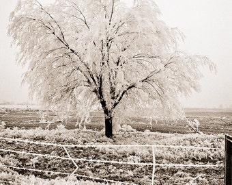 Frost winter Photograph tree linen cold late fall first winter white cream beige sepia field branches - Frozen fog - fine art photograph