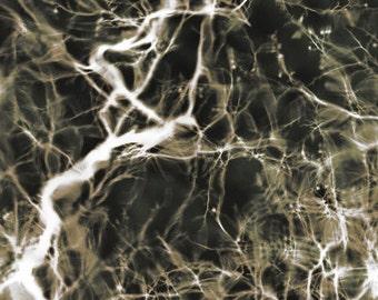 Neurons Firing 8x10 Inch Photographic Print