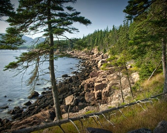 Atlantic Shoreline Pine Tree on Mount Desert Island in Acadia National Park in Maine No.176 A Fine Art Seascape Photograph