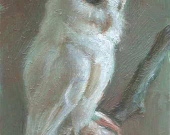 Open Edition Print - Albino Screech Owl - Print from tiny oil painting
