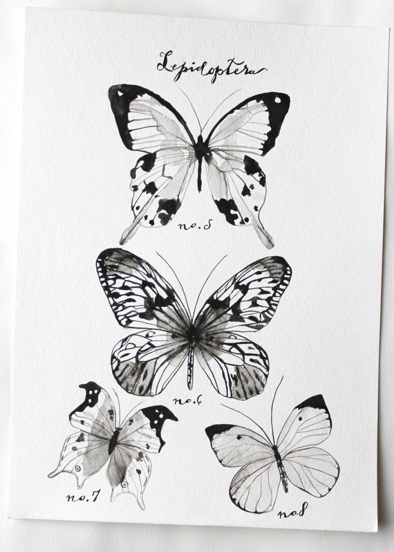 Butterfly Art- Lepidoptera Study Original Watercolor Painting by Sarah Storm