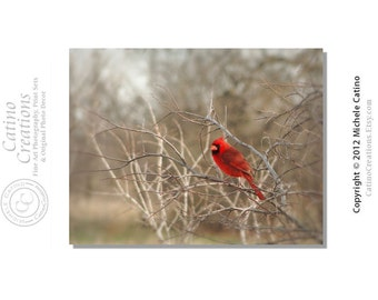Cardinal in a Tree, Red Bird in Branches, Monotone with Red Cardinal Signed Photo