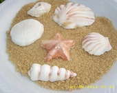 24 Edible Gumpaste Seashells