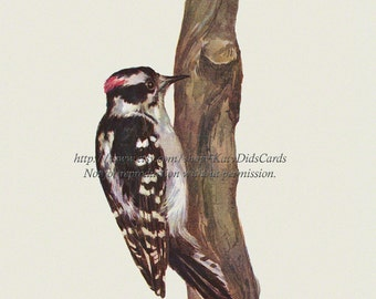 Downy Woodpecker Fabric Block - Repro from Prang 1889 Image