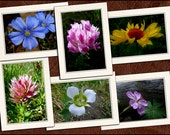 6 Wildflower Photo Note Cards Set - 5x7 Flower Note Cards - Blank Note Cards With Envelopes - Flower Greeting Cards Handmade (GP64)