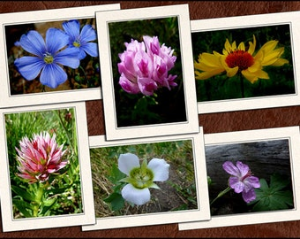 6 Wildflower Photo Note Card Set - 5x7 Flower Note Cards - Blank Note Cards With Envelopes - Photo Greeting Cards Handmade (GP64)