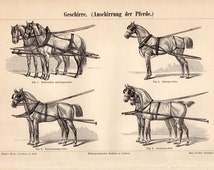 1894 Draft Animals Antique Print, Geschirre, Draught Horses, Carriage Horses, Horse Harnesses, German Lithograph
