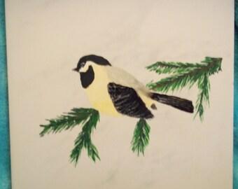 Chickadee on Evergreen Bough