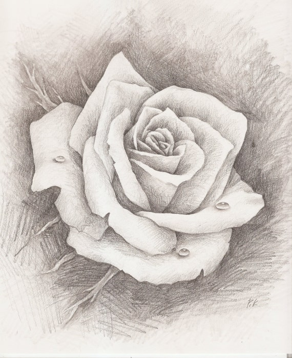 Items similar to ORIGINAL - Pencil Drawing, Rose, Water ...