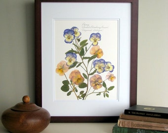 Pressed flower print, 11x14 double matted, Pansy Viola flowers, nature lover gift idea, wall decor no. 0015
