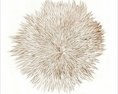 "Art sepia drawing print ""Notes From a Walk on the Beach-1"" original art, Sea Urchin, beach art, ocean art"