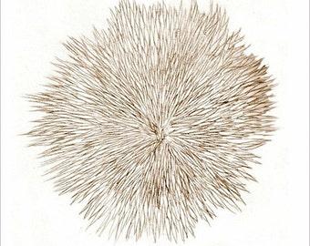 """Art sepia drawing print """"Notes From a Walk on the Beach-1"""" original art, Sea Urchin, beach art, ocean art"""