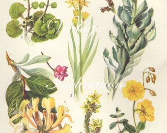 Vintage Botanical Print Antique FLOWERS, plant print botanical print, bookplate 15 art print, yellow plants plant wall