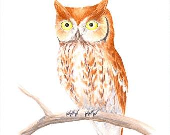 "Watercolor Owl Painting: Original Red Screech Owl Illustration, Woodland Bird Painting, Watercolour Owl Art, 10"" X 8"""