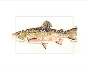 Brooke Trout Fish Art - Color Wash and Pencil Illustration for Wall Decor - Original Fish Art Limited Edition Reproduction
