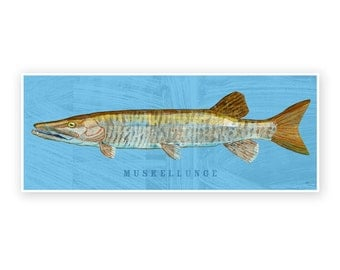 """Freshwater Fish Art- Muskellunge Art Print 6.6"""" x 18""""- Freshwater Fish Decor for Dad- Gift- Kids Fish Art- Fishing Art- Gift for Dad"""