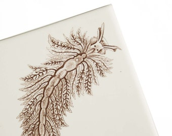 Ceramic tile trivet - white matte with iron decal image of a seaslug - for the marine biologist in your life