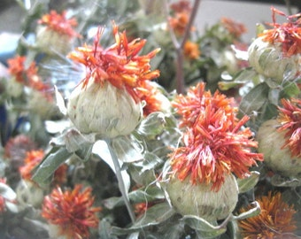 SAFFLOWER   naturally DRiED FLOWER Bunches