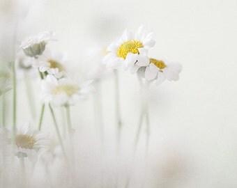 "White Daisies, Minimalist Flower Photography, Botanical Print, Floral Art, Nature Photography, Spring Decor, 8x8 ""Secret Garden"""