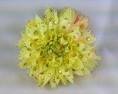 Large Yellow Dahlia Hair or anywhere clip