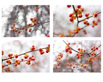 Red Berry Winter Landscape Photography, Four Prints, Rustic Wall Decor,  Nature Photography, Woodland Art,