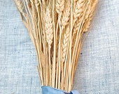 Bulk Stems Western Golden Wheat