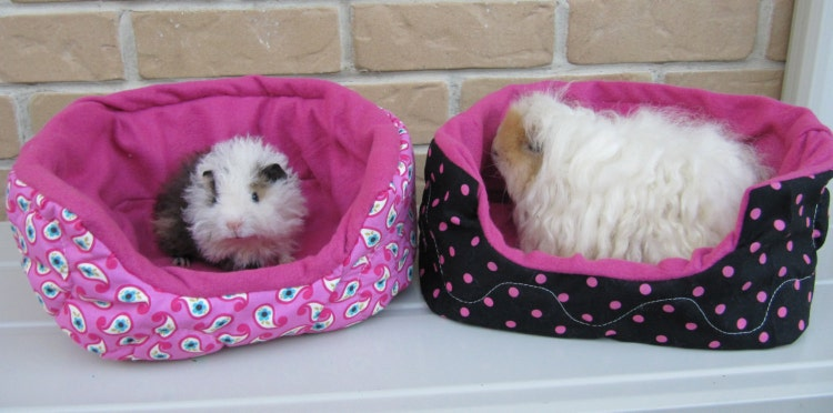 Guinea Pig Plush Igloo And Cavy Couch Pattern Make By