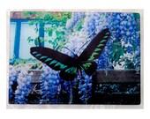 Butterfly, glass cutting board, wedding gift,butterfly glass, butterfly gift,malaysian butterfly - trogonoptera brookiana