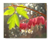 Valentine Heart Print Bleeding Hearts in the Woods Photograph...Nature Photography  Woodland Scene Flower Botany Print