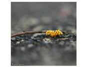 Ladybug Eggs On Tiny Stick  Photograph  Affordable Home Photography Prints Nature Photography Decor Nature Lover Woodland Scene