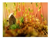 Tiny House in the Moss Photograph...Autumn Trends Fall Trends Halloween House in the Woods Leaves Moss Woodland Scene Orange Nature