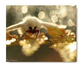 Moth on a Fern Photograph Print Affordable Home Photography Prints Nature Photography Woodland Scene Fern Moth Whit Moth Print
