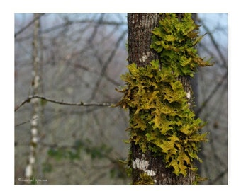 Lichen in the Forest Photograph Woodland Scene Forest Scene Green Lichen Foggy Morning Photograph Green Life Earth Fall