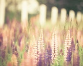 Nature photography, pastel shades, lavender, pink lupins, purple, summer flowers, soft home decor feminine shades - Pastel Summer