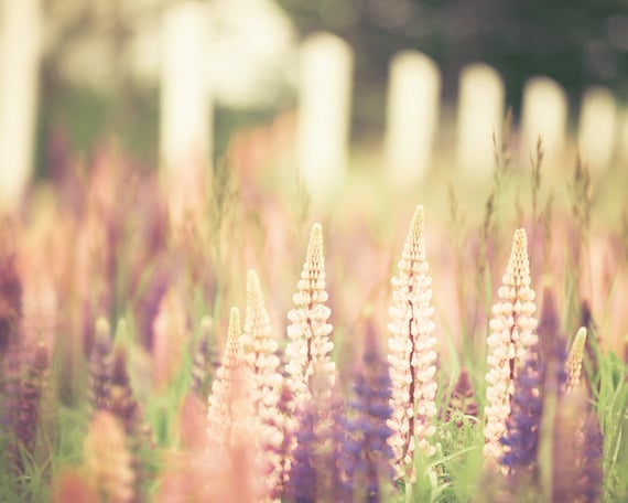 Nature photography, pastel shades, lavender, pink lupins, purple, summer flowers, soft home decor feminine shades - Pastel Summer