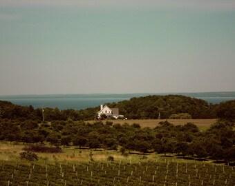Landscape Vineyard Color Nature Photo