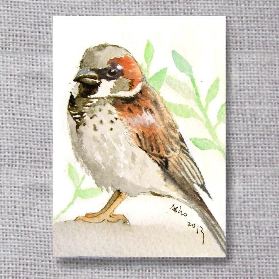 ooak House Sparrow original ACEO painting- buy 3 get 1 free