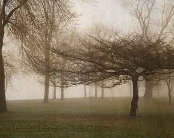 Nature Photography - Tree Two 8x10 Vintage