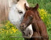 Devotion, photographic print of mother horse and new born foal