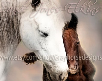Tenderness 11x14 inch Equine Photography