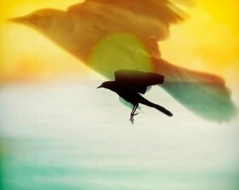 Land - Fine Art Print - Bird - Flying - 8x8 Color Photograph - Fine Art Color Photography