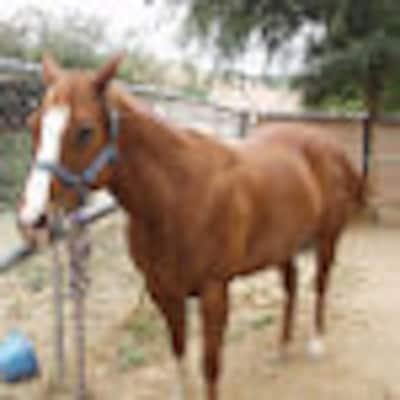 ladywithhorses
