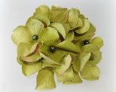 Brooch,Hat Pin, Handmade with Lime Green  Hydrangea Flowers,Fascinator, Hair Accessory